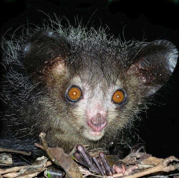 11 абсолютно безвредных животных, которых люди боятся до смерти  животные, страх