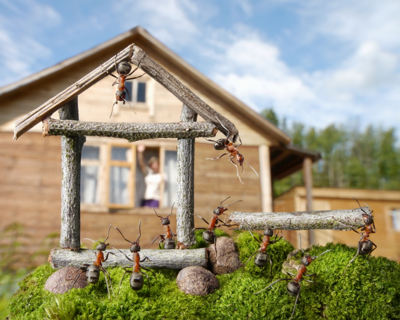 Картинки по запросу Веселая муравьиная жизнь в фотографиях Андрея Павлова