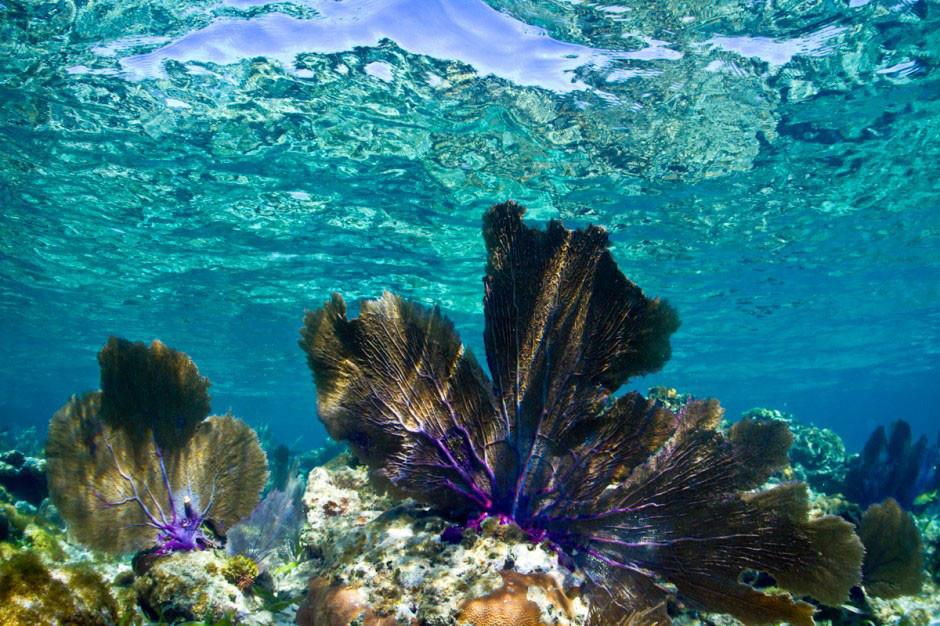 9. Острова Кайос Кочинос, Гондурас в мире, вода, планета