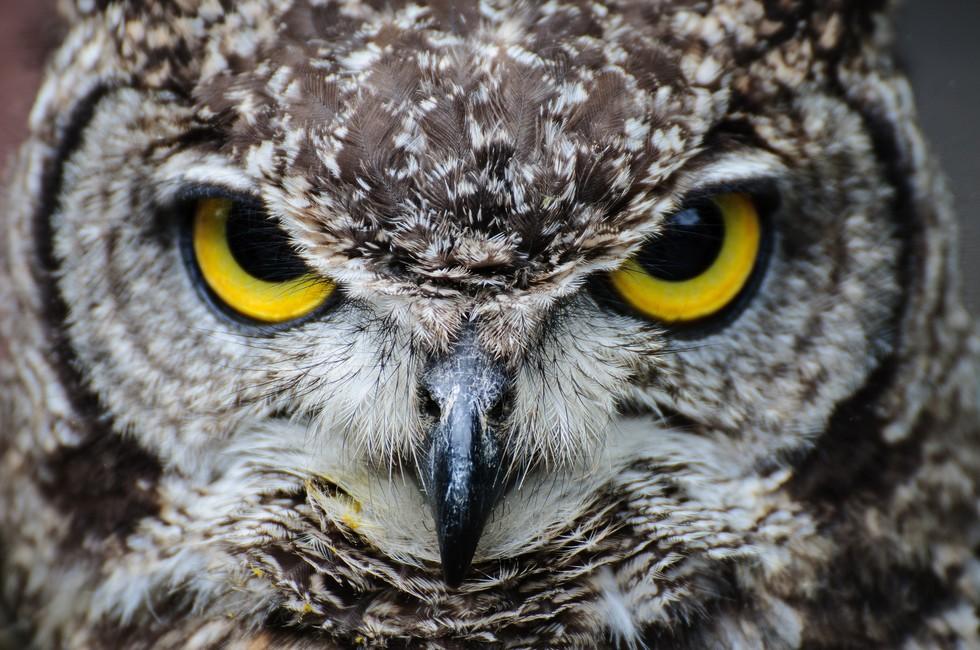 1. Первый шаг в гипнозе - полное расслабление  взгляд, гипноз, сова