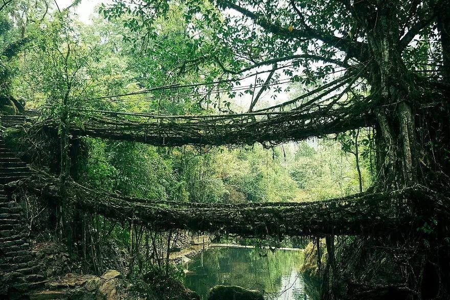 Мост из корней, Индия в мире, мост