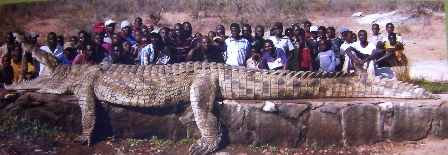 Самый большой крокодил. Самые большие животные, животные, рекорды