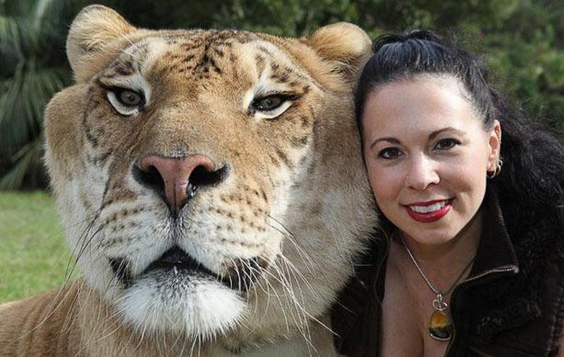 15 самых больших животных-рекордсменов Самые большие животные, животные, рекорды