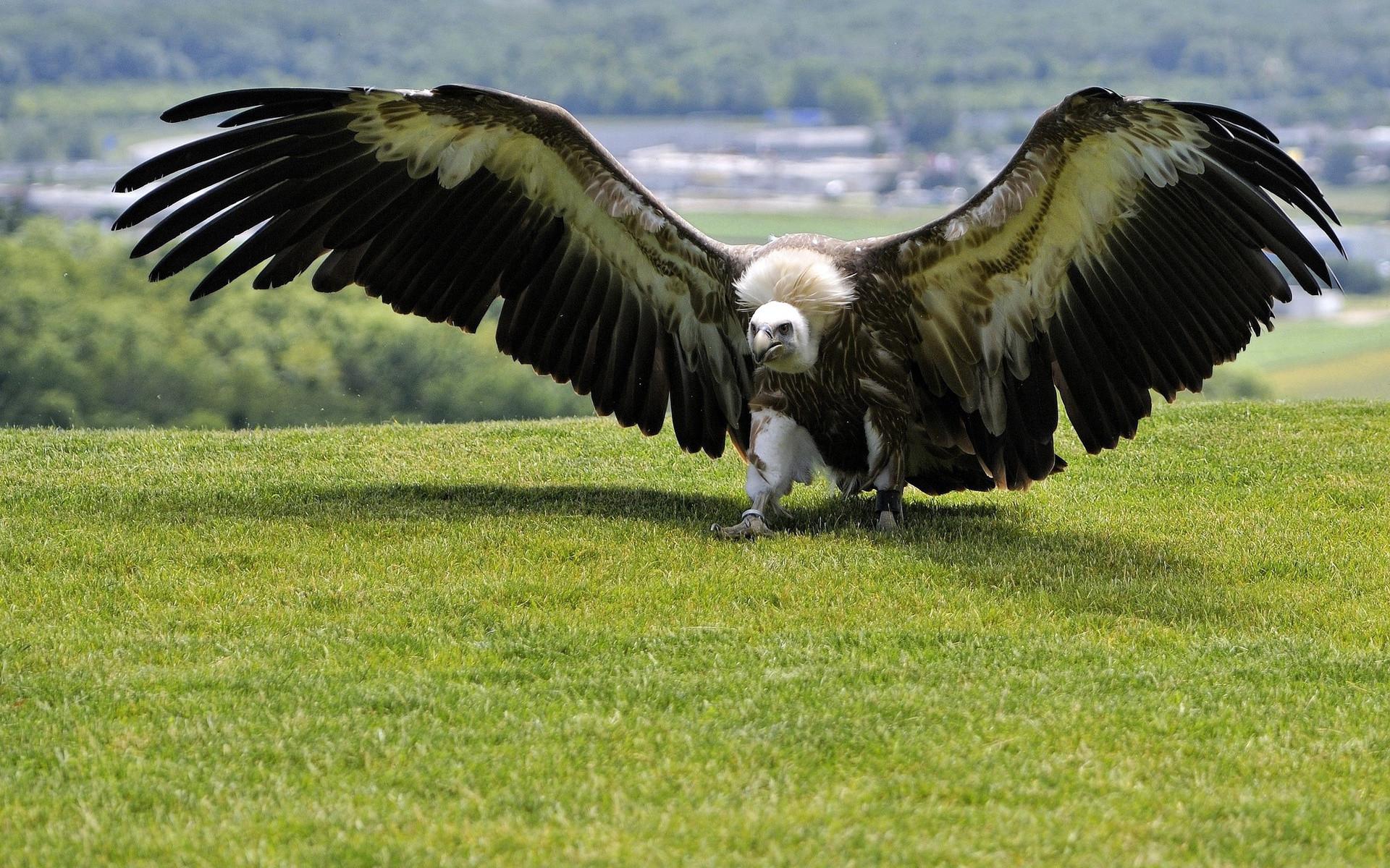 Самая большая летающая птица. Самые большие животные, животные, рекорды