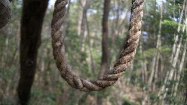 Лес Аокигахара, Япония. зловещие места, интересное, история, мир, факты