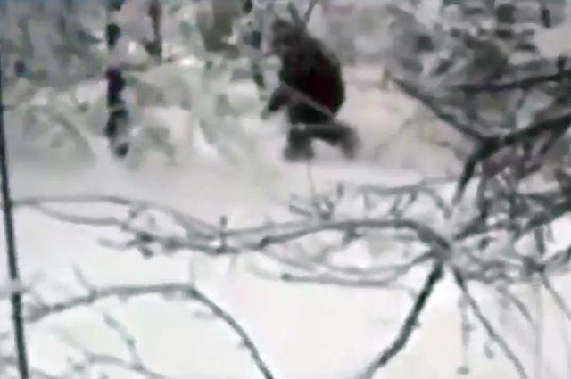 Снежный человек тоже где-то пробегал Майкоп, адыгея
