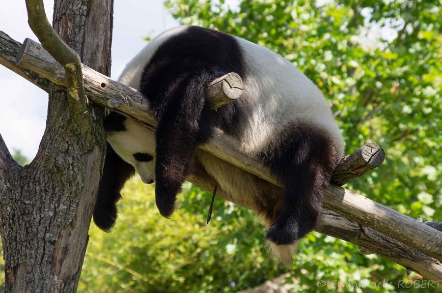 цветовая фото скучающих животных влияние