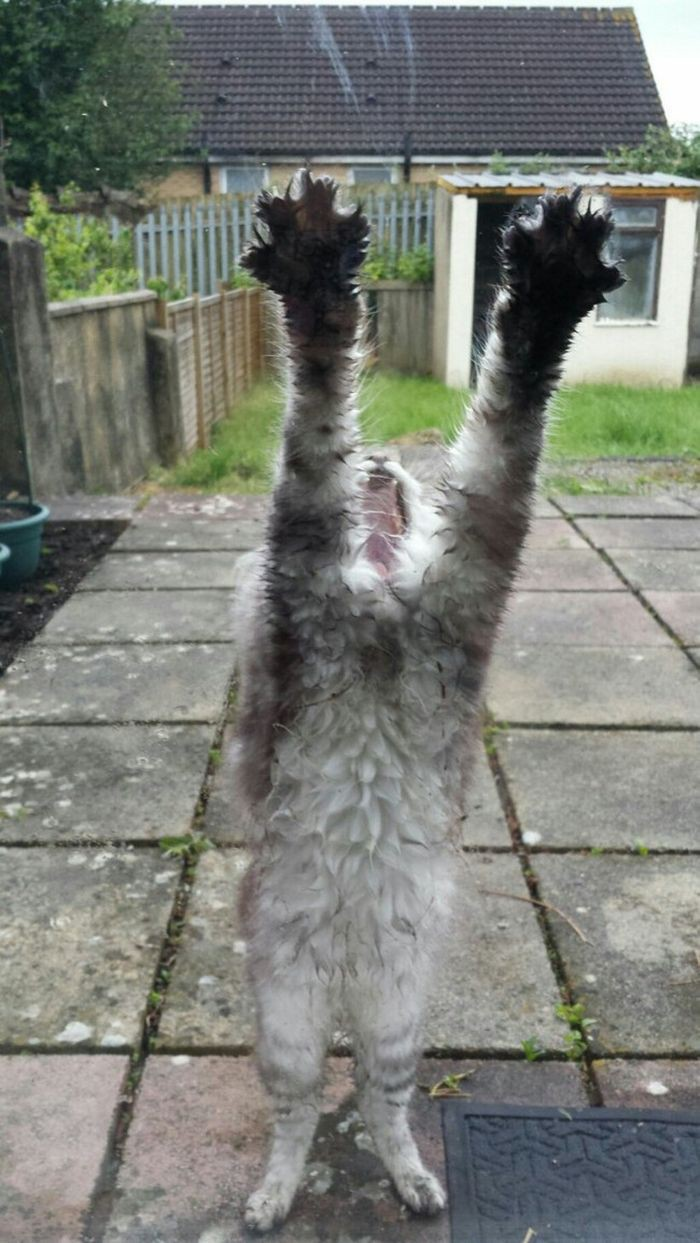 10. «Пожа-а-а-а-а-а-а-луйста!!!» животные, кот, окно