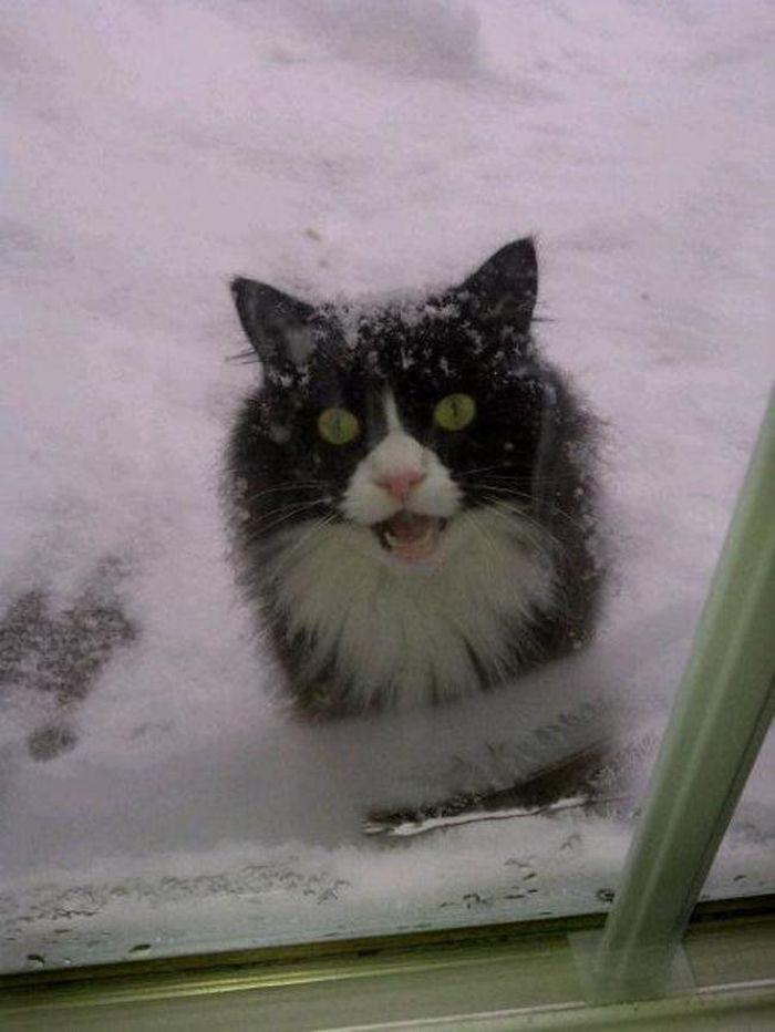 6. «Эмм, ребят, тут действительно холодно…» животные, кот, окно