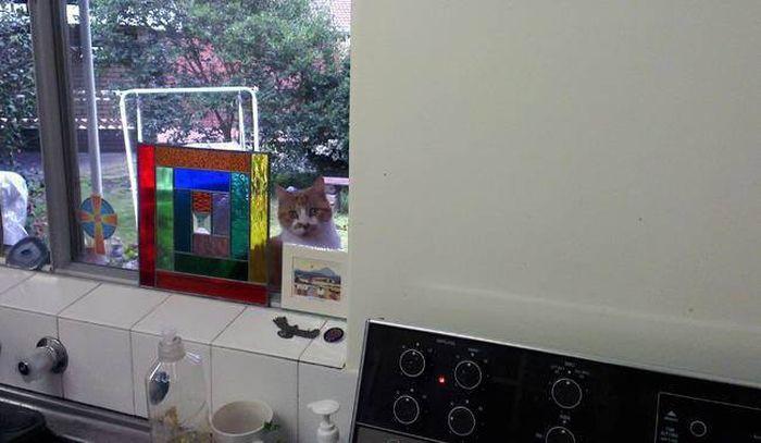 5. «Немедленно положи ложку и открой дверь!» животные, кот, окно