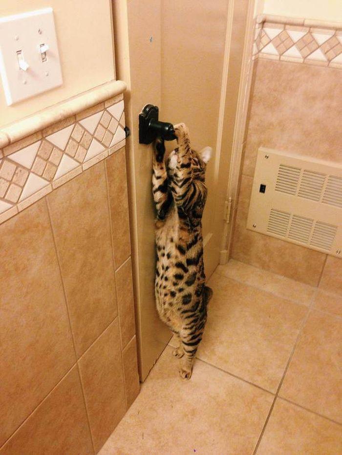 19. «Да, вы меня впустили. Теперь — выпускайте обратно!» животные, кот, окно