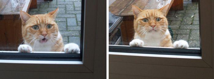 17. «Отлично… Если это моя судьба…» животные, кот, окно