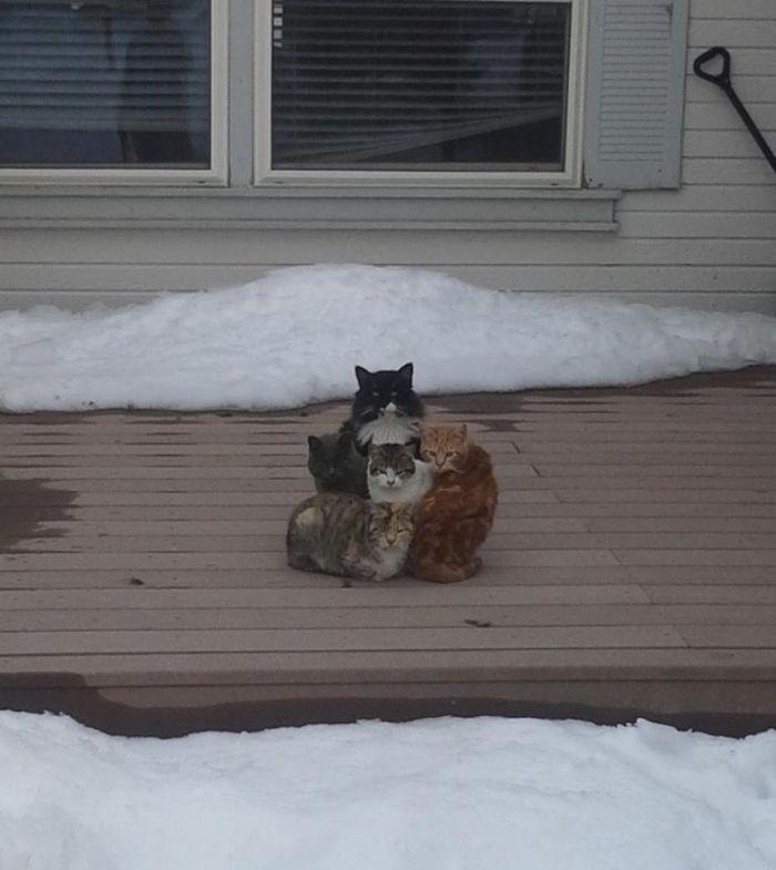 18. «Ничего… сочтёмся…» животные, кот, окно