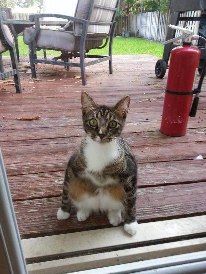 13. «Окей, я подожду, но потом не обижайтесь…» животные, кот, окно
