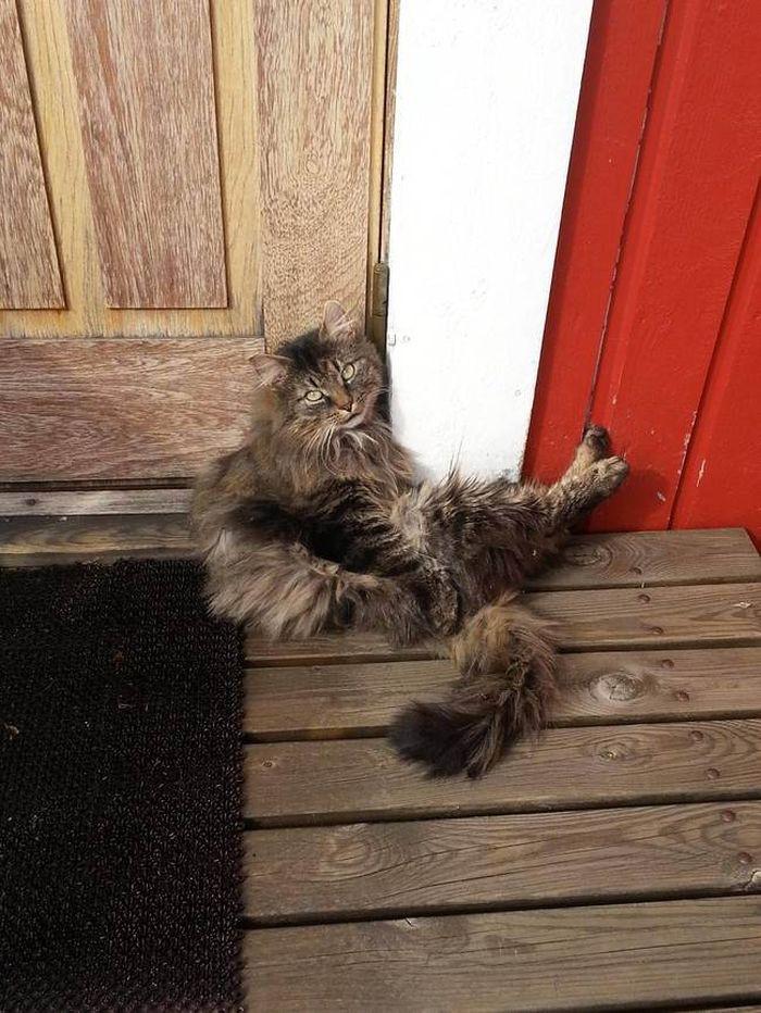 15. «Ну, и где вы были целый день?» животные, кот, окно