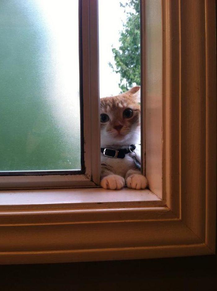 11. «Просто открой окно пошире…» животные, кот, окно