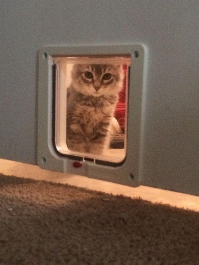12. «Эта дверка слишком мелкая для Моего Величества. Открой нормальную!» животные, кот, окно