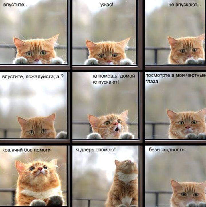 19 кошек, у которых жизненный кризис, потому что их не пускают домой животные, кот, окно