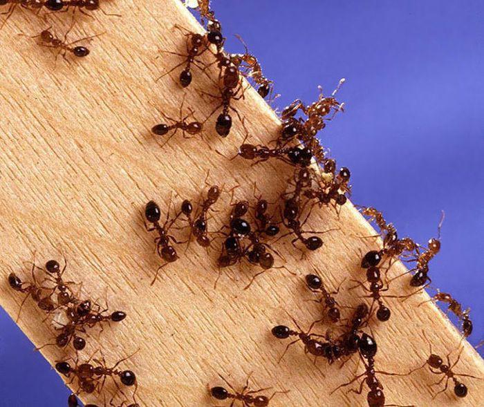 7. Муравьи дача, насекомые