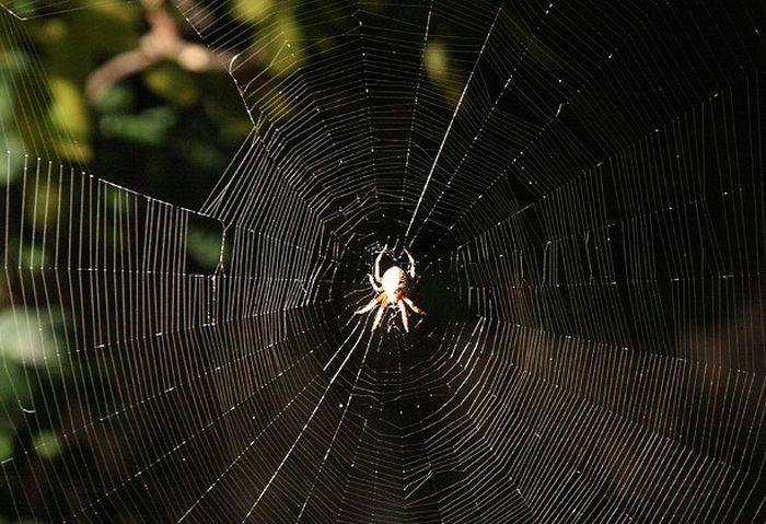 8. Паучок дача, насекомые
