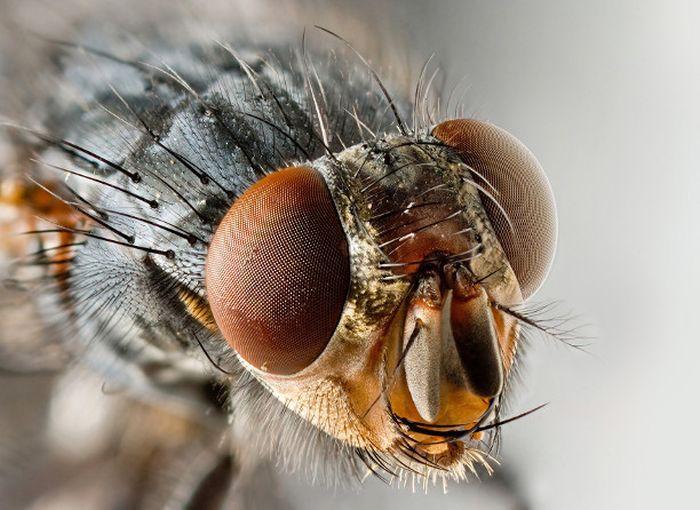 5.  Муха дача, насекомые