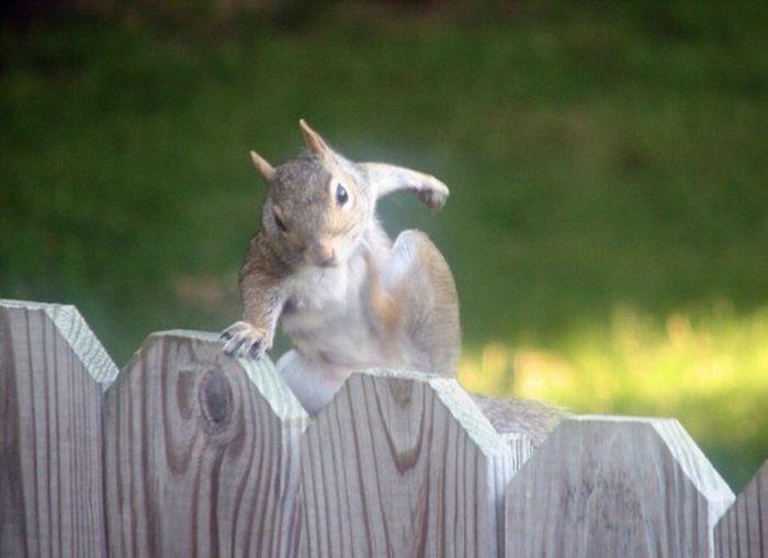 Это я сейчас перемахну через забор и расскажу кто здесь толстая! девушки, животные