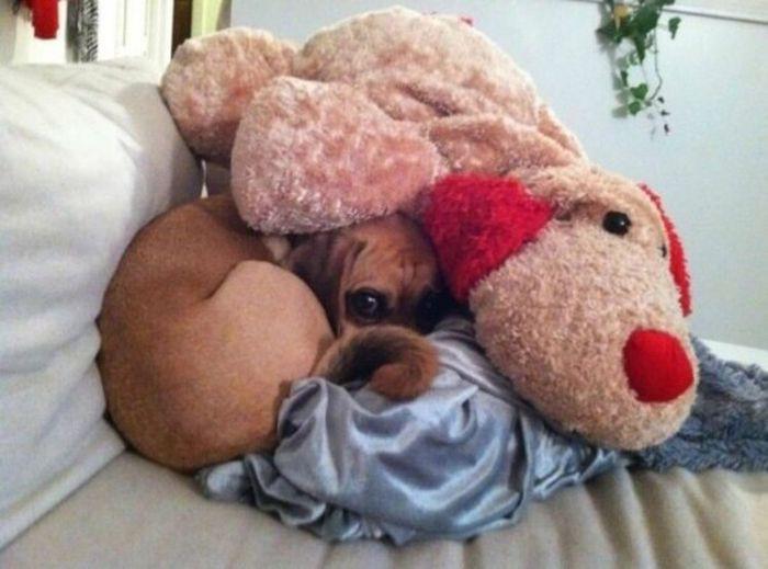 Это я жду любимого домой девушки, животные