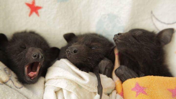 10.  Новорождённые детёныши летучих мышей детеныш, животные