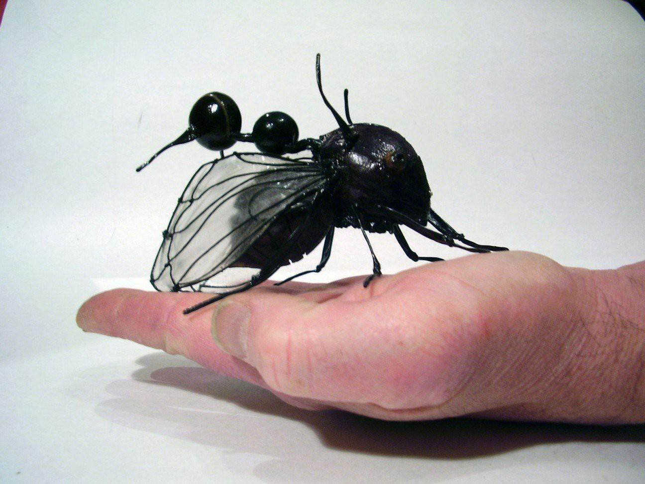 Бразильская горбатка жук, планета
