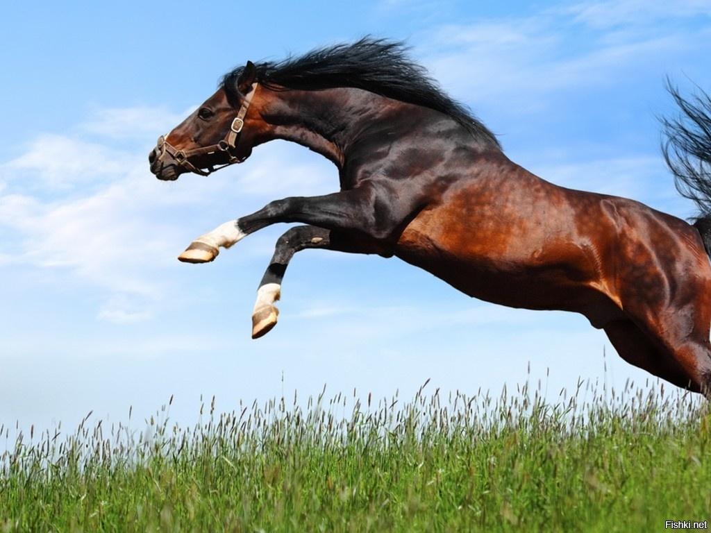 Лошади услышали и стали выбегать из моря.