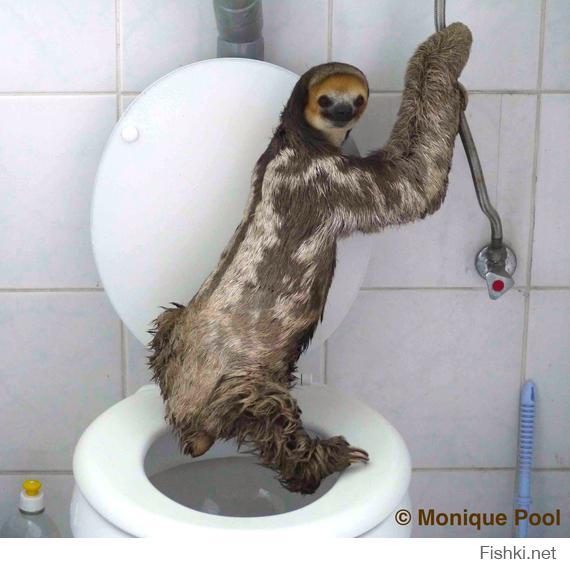 Куда ходит в туалет енот