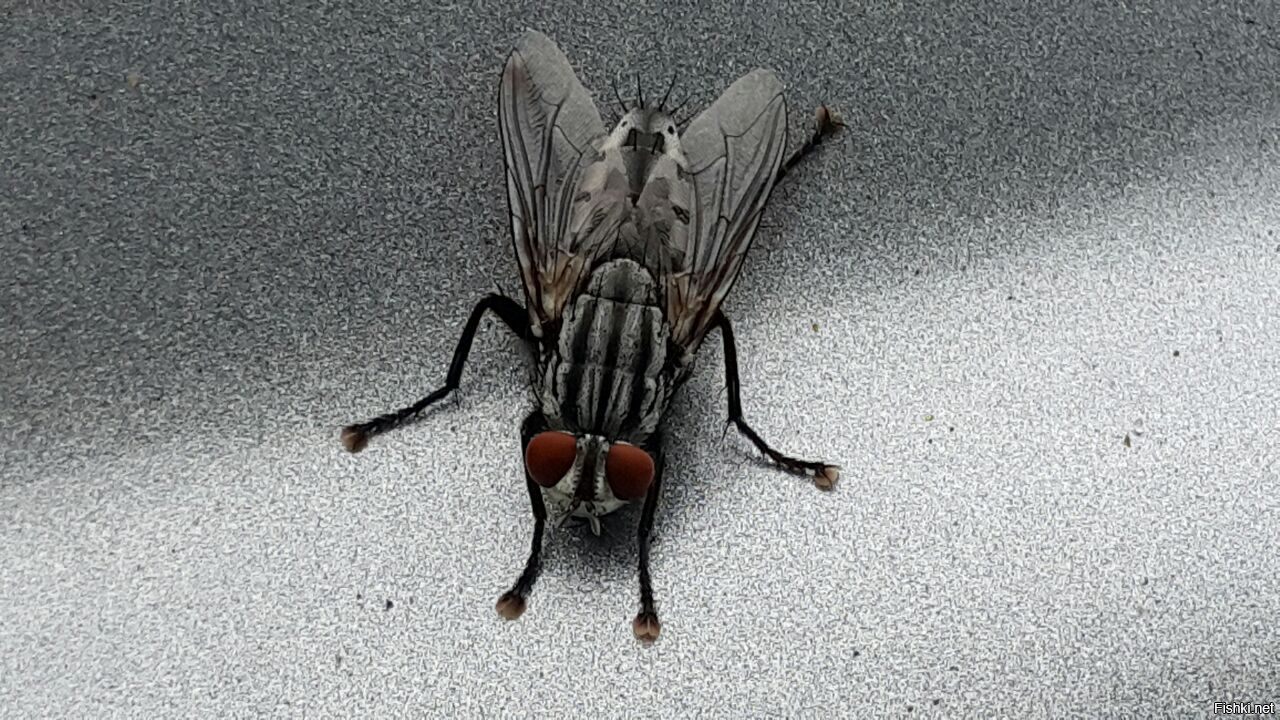 обычно живые картинки мухи довольно