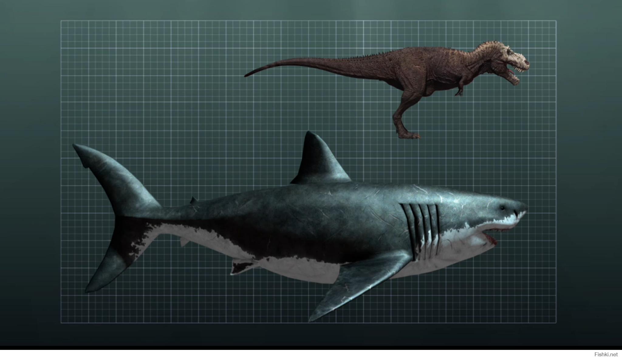 megalodon shark size - 1200×675