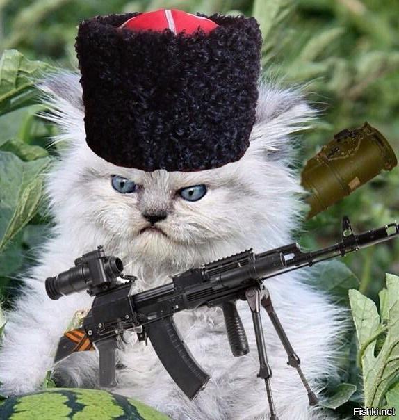 дом коты бойцы картинки обещала, что