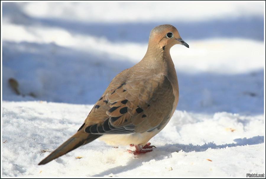 исчезнувшие животные и птицы в картинках всех желающих будет