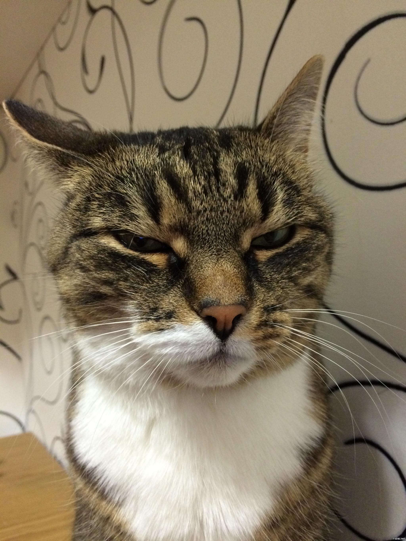 фото подозревающих котиков сослужащий
