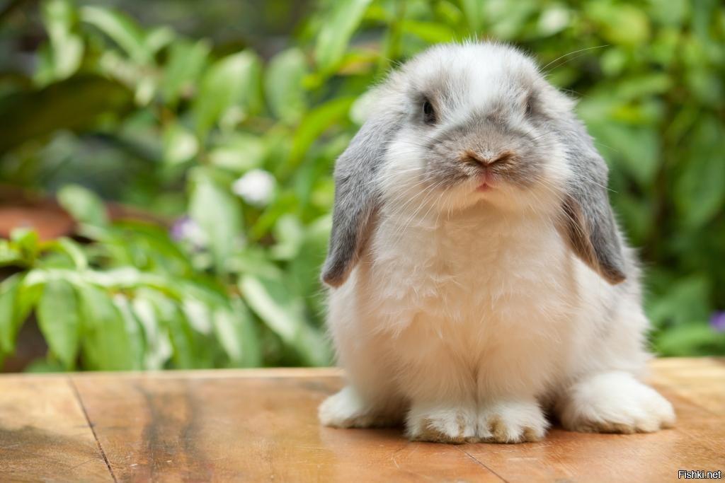 такой картинки с пушистыми кроликами вредители, которые