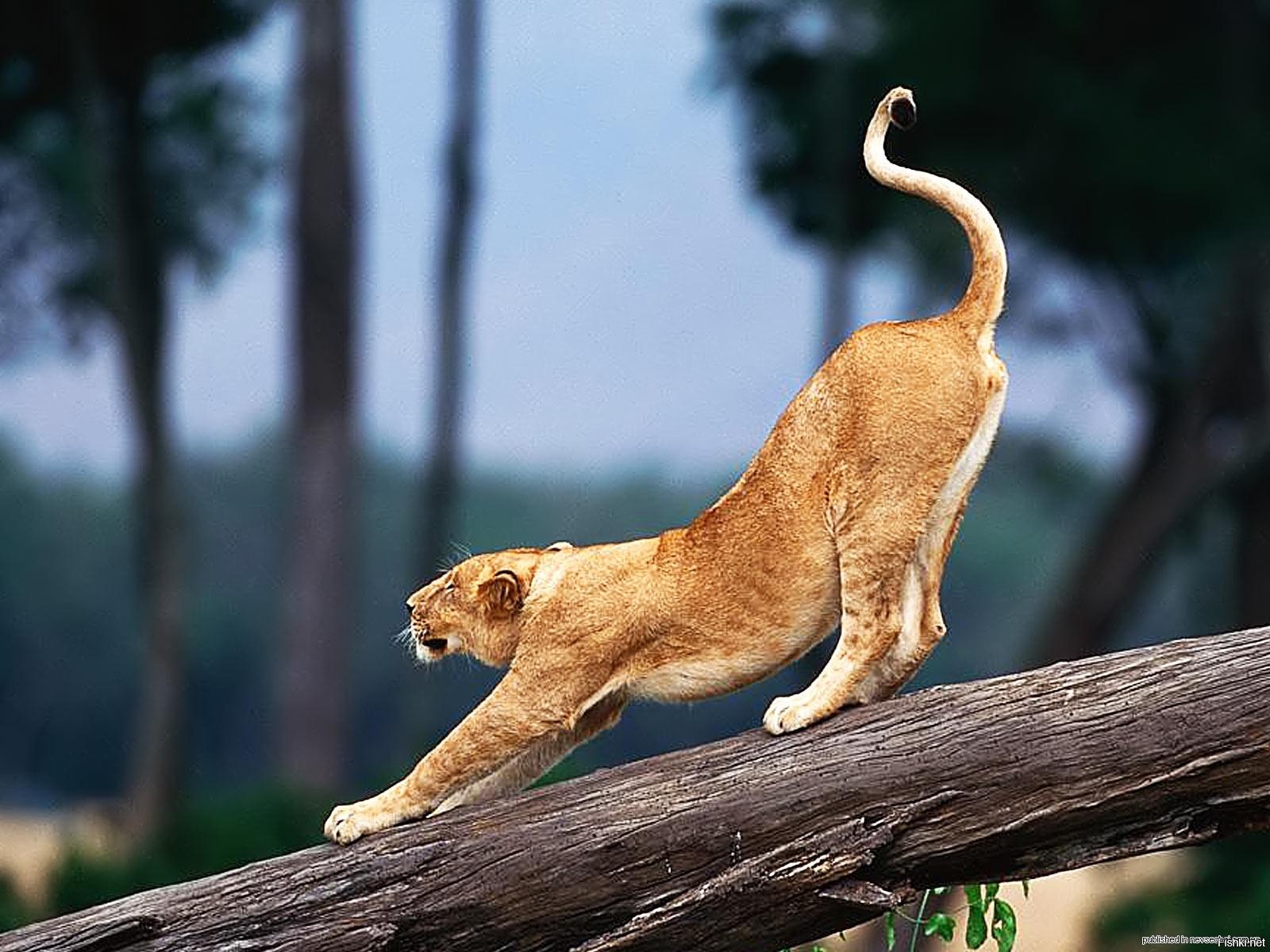Грациозные животные картинки