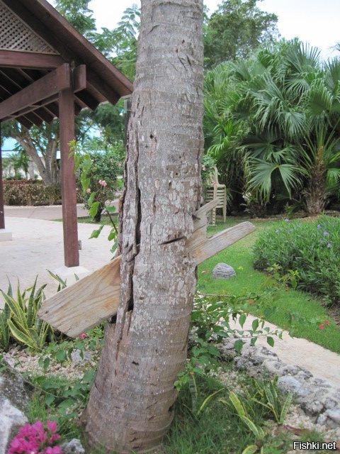 дерево пробитое соломинкой фото область
