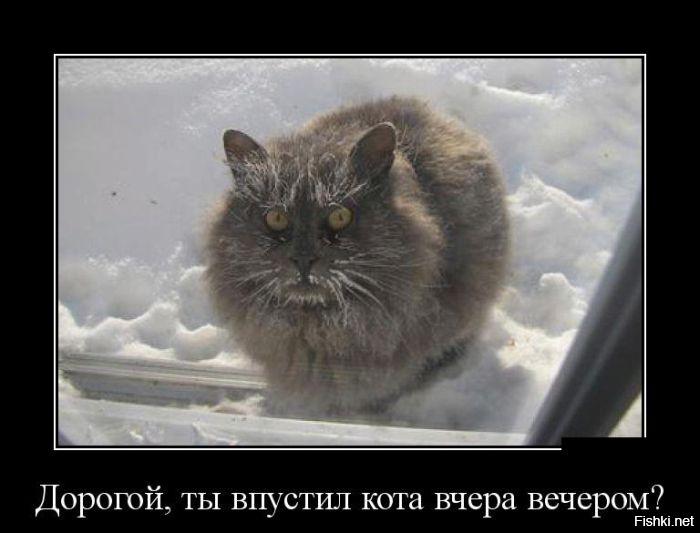 забывал демотиваторы дорогой ты кота впустил активирует женскую