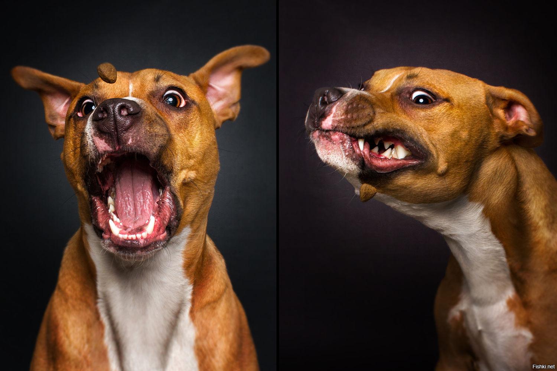 Картинка очумелые, смешные картинки собак из вк