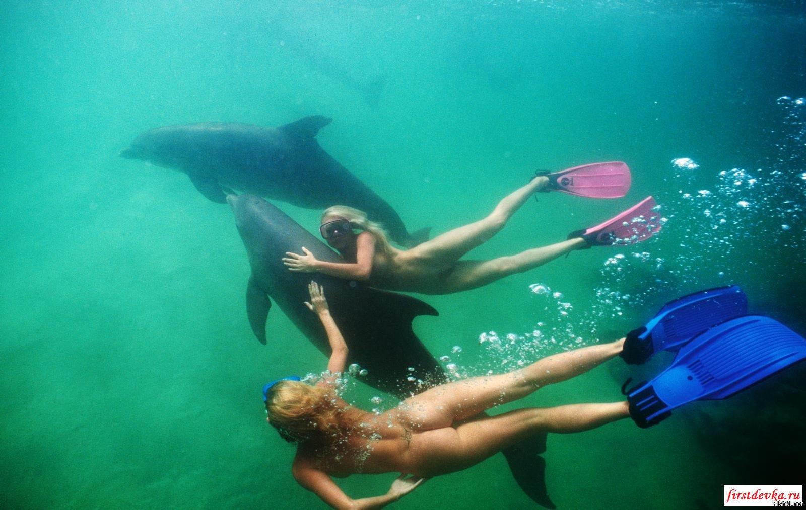 Фото вагина дельфина, Половые органы дельфинов: описание 18 фотография