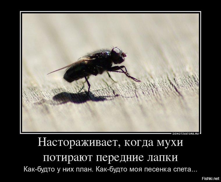 Смешные картинки о мухах