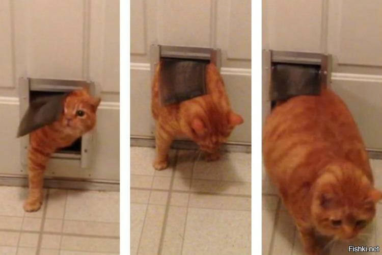 Chubby kat door — pic 10