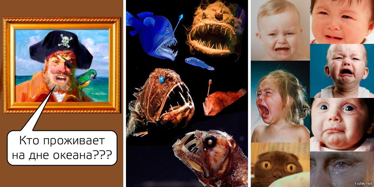 Что проживает на дне океана картинки