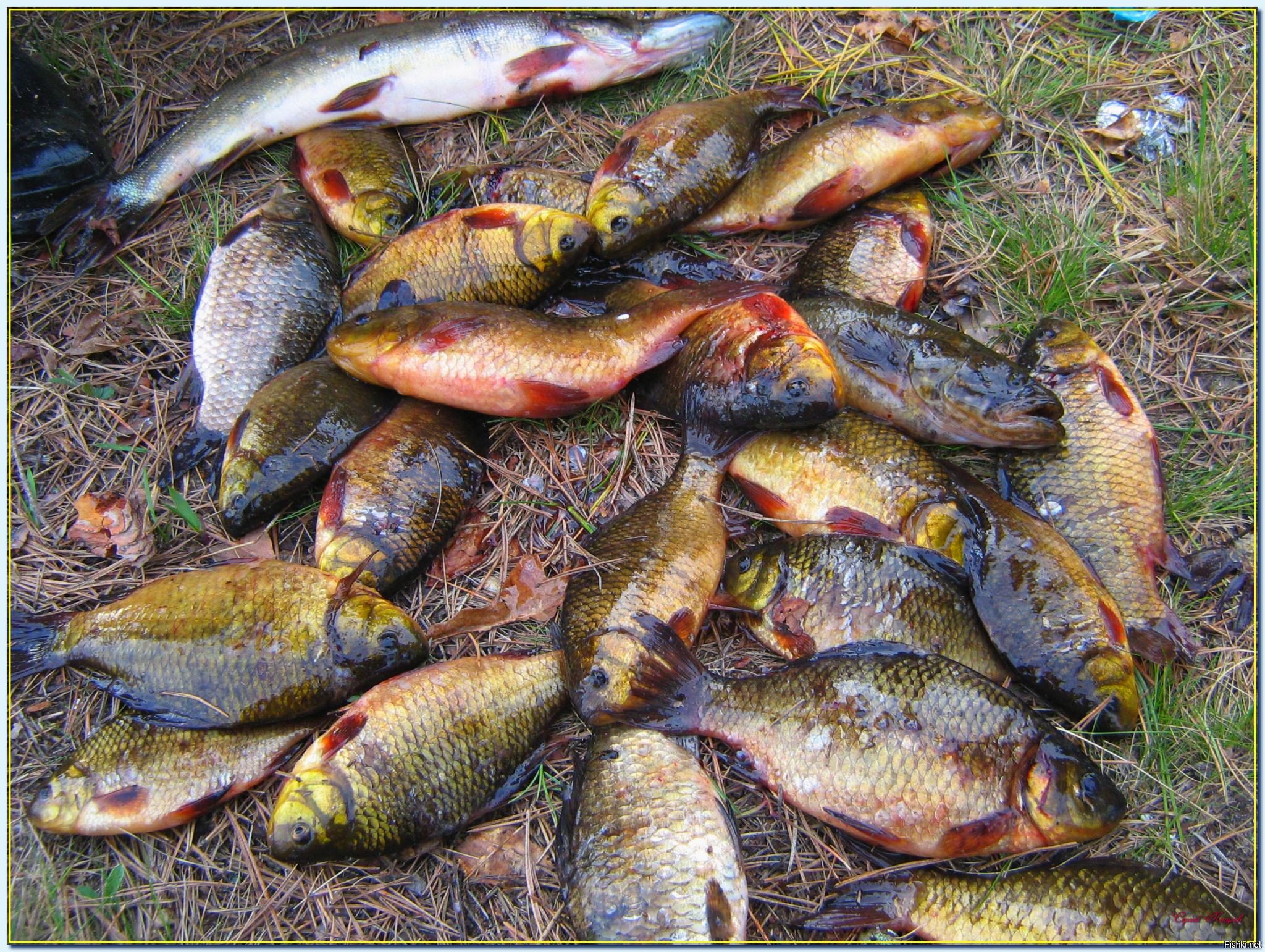 как правильно фотографироваться на рыбалке и охоте механические часы