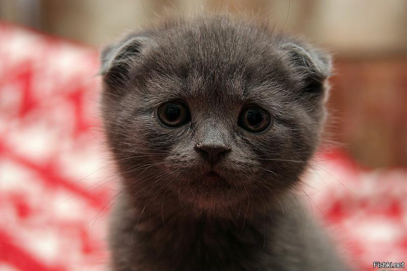 поверьте, картинки грустный котенок вот