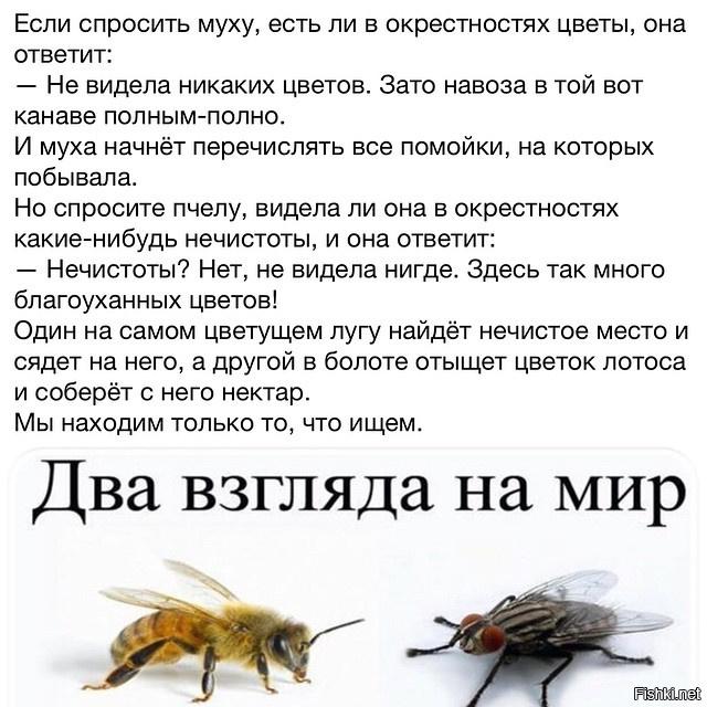 ребенок садятся ли пчелы на гавно АЗС история изменений