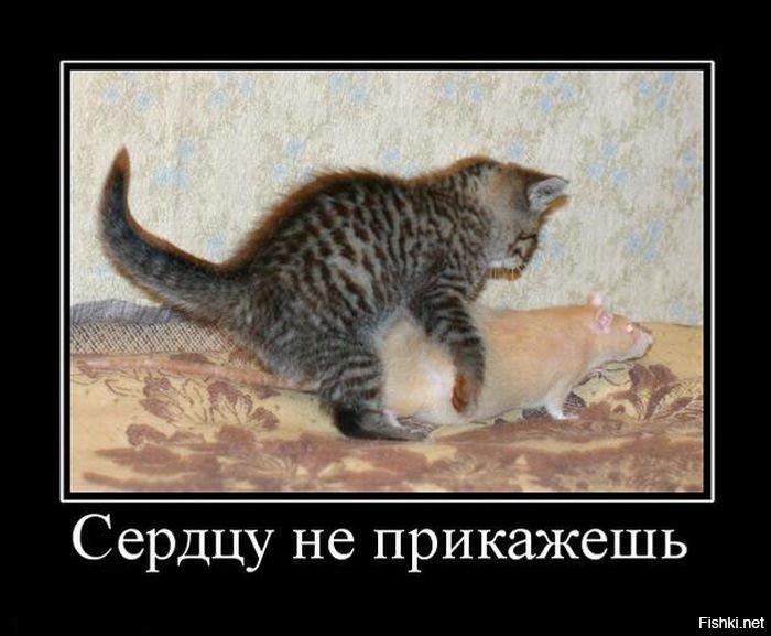 Прикольные картинки про животных без матов