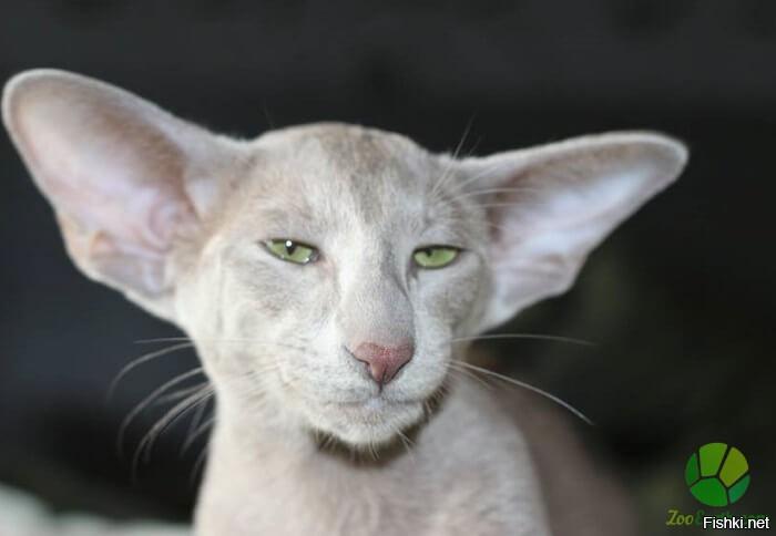 ultrasonic cat repellent b&q